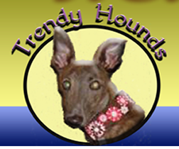 trendy hounds